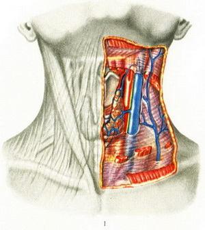 Молочница у мужчин: симптомы, лечение и фото молочницы